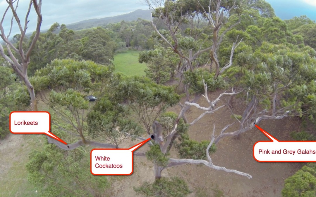 White Gum may be condemned by latest Tallowood Ridge Estate proposal
